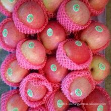 Nueva cosecha de Qinguan Apple se acerca pronto