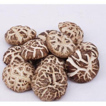 Fresh Cultivated King Flower Shiitake Mushroom