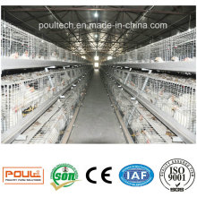 Automatic Broiler Cage System Poultry Farm