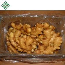 La Chine le gingembre frais exporte le monde