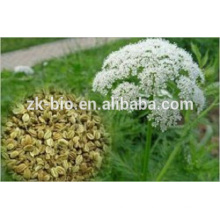 Hot selling Fructus Cnidii Extract powder