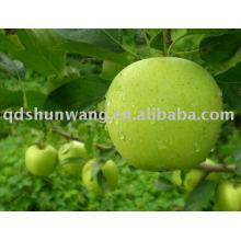 Class A golden apple