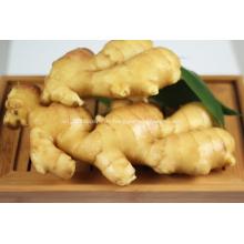 Gingembre frais/Air Dry Ginger pour l'exportation