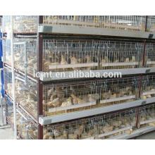 Meilleures ventes africaines 8 ans de vie de service Cages de batterie commerciales pour les couches pour les fermes