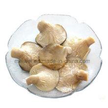 Dose Abalone Pilz mit bestem Preis