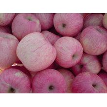 China fuji äpfel fruchtimporteure großhandelspreise apfelfrucht