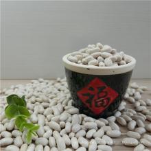 Safra 2016 preço de feijão branco / feijão / feijão cozido