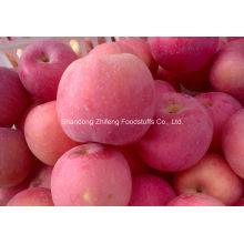 Apple rouge FUJI pour l'exportation