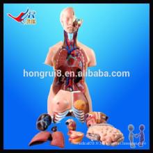 Modèle universel ISO 85CM (40 parties), modèle médical du corps humain