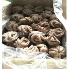 octopus 1-3kg