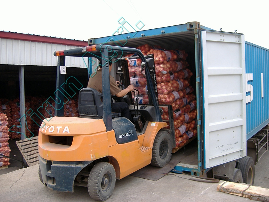 Best Fresh Onions for Export