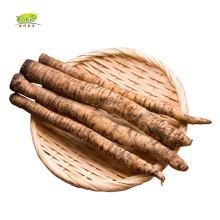 Chinese New Crop Shandong Fresh Burdock Root Price With Good Price