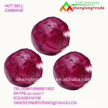 Chou rouge chinois bas prix 2011 vendre par l'usine