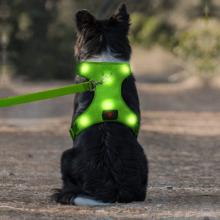 USB перезаряжаемый жгут без жгута для домашних животных