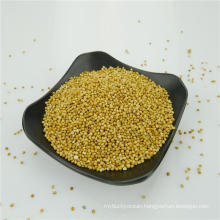 Yellow Millet In Husk with competitive price
