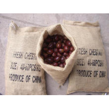 Professinal Exportando Novo Crop Boa Qualidade Chestnut