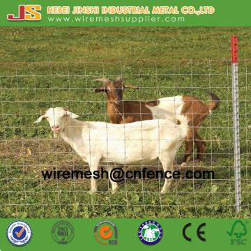 Galvanisierter Viehzaun und Scharniergelenk Zaun Fixed Knot Field Zaun Mesh für Tiere