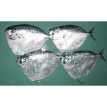 100-200g Congelado todo Moonfish redondo