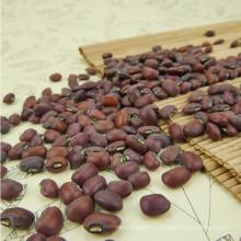 Beans vermelho com bom fabricante