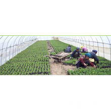 Woven Geotextile Ground Cover Weed Mat PP Material with UV