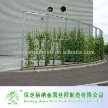 Dekorative grüne Pflanze Klettern Maschendraht
