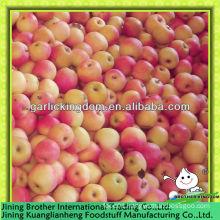 China shaanxi red gala apple