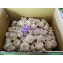 Paquetes de ajo chino en bolsa o cartón