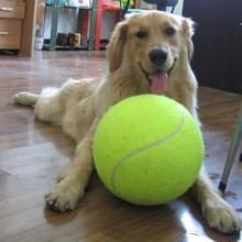 Pelota de tenis para perros Giant Pet Toys para perro