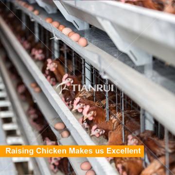 Sistemas de alojamento de aves de capoeira de design Tianrui para galinhas poedeiras