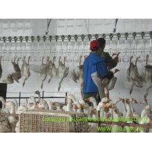 Goose Slaughter House Equipment for Chicken, Duck Halal Slaughrering