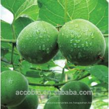 Extracto de fruta de monje libre de alta calidad natural del extracto 10% ~ 55% Polvo de extracto de fruta de Monkroside V polvo monje