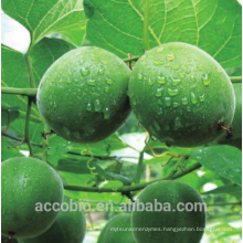 Natural High Quality Sweetener Free Monk Fruit Extract 10%~55% Mogroside V Powder monk fruit extract powder
