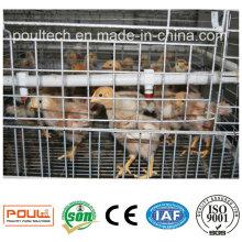 Full Set Equipment Chicken Cages/Chicken Coop