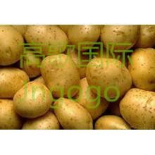 Chinesische frische gute Qualität große Kartoffel