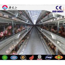 Estructura de acero casa de aves de corral prefabricada, casa de pollo con equipos (JW-16209)