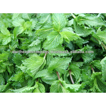 Mint for good health