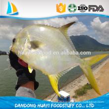 new arrival whole round frozen pompano fish