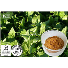 Pure Natural Spinach Extract 1%-5% Beta-Ecdysterone; 5%-98% Spinasaponin