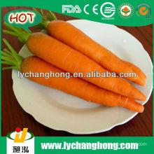 Fresh Carrot For Sale