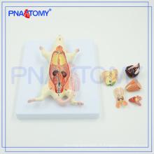 PNT-0821 modelo anatômico animal Modelo de dissecação de ratos