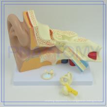 ПНТ-0670 Профессиональный Китай медицинская Анатомия 4 раза гигантские модели уха для школы