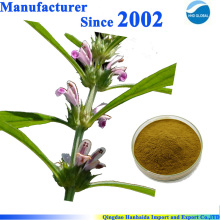 Chinese herb Motherwort Extract