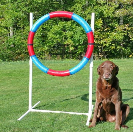 Dog Agility Practice Tire