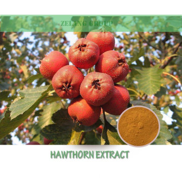 Hawthorn Flavours Hawthorn Extract