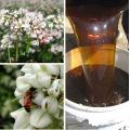 Pure Dark Buckwheat Honey