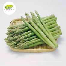 Bulk wholesale distribute IQF Frozen asparagus