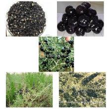 Medlar Manufacture Versorgung Organic Black Goji Berry