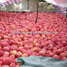 fuji rouge pomme fraîche