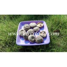 Glatte Shiitake Mushrooms 1kg Pack mit Cap 4-6cm und ohne Stiel