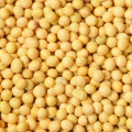First-rate Nourishing delicious harmless Yellow Soybeans